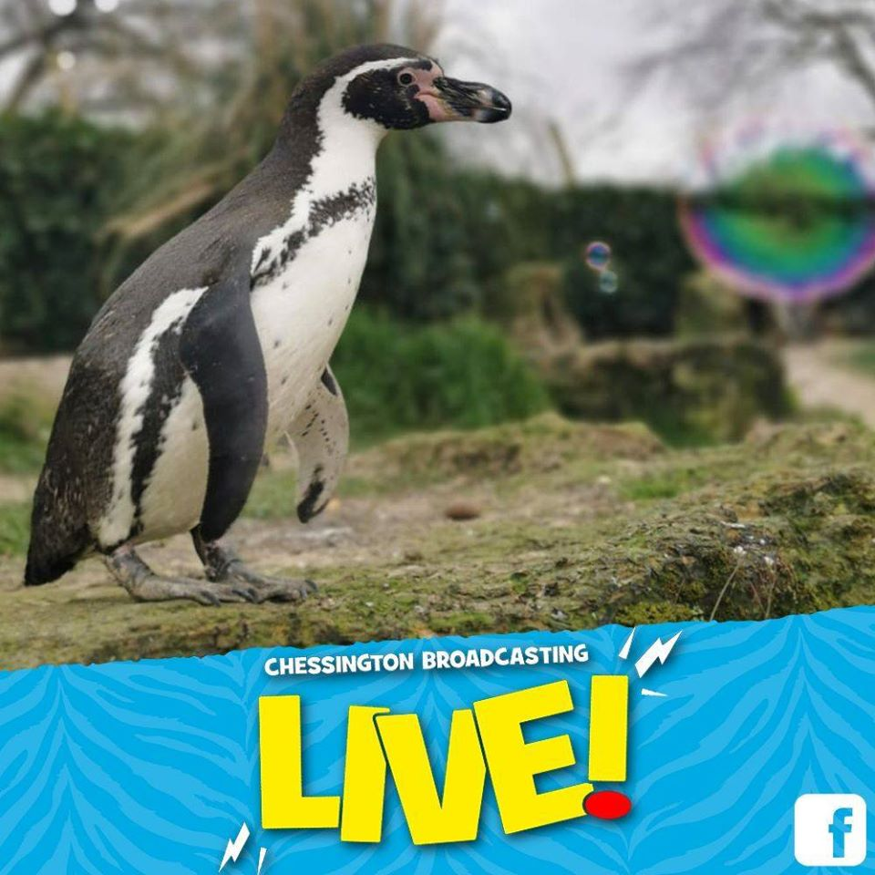 Penguin Facebook Live