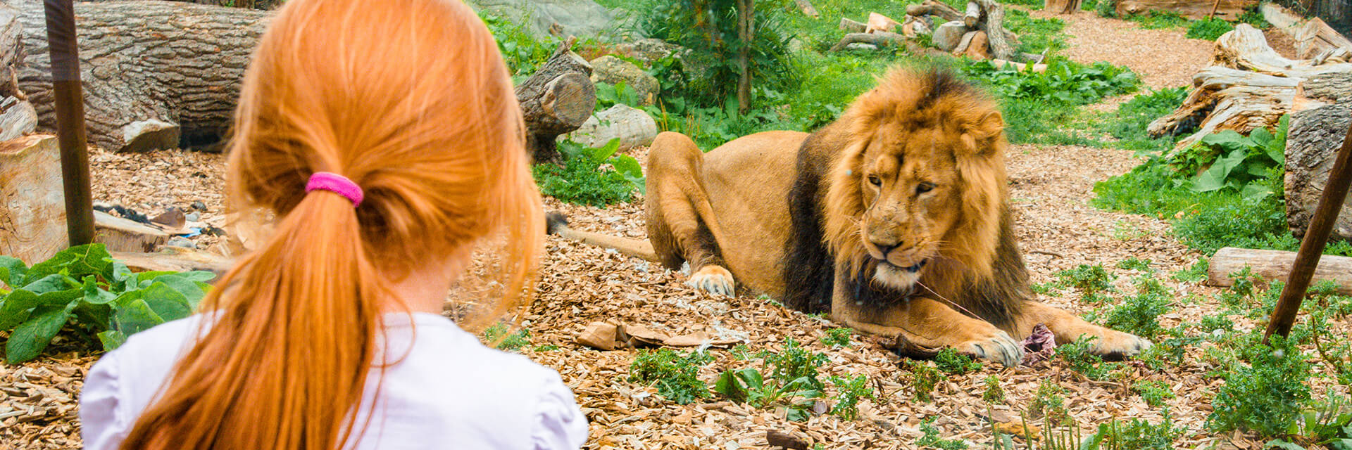 Zootastic Sleepovers at Chessington